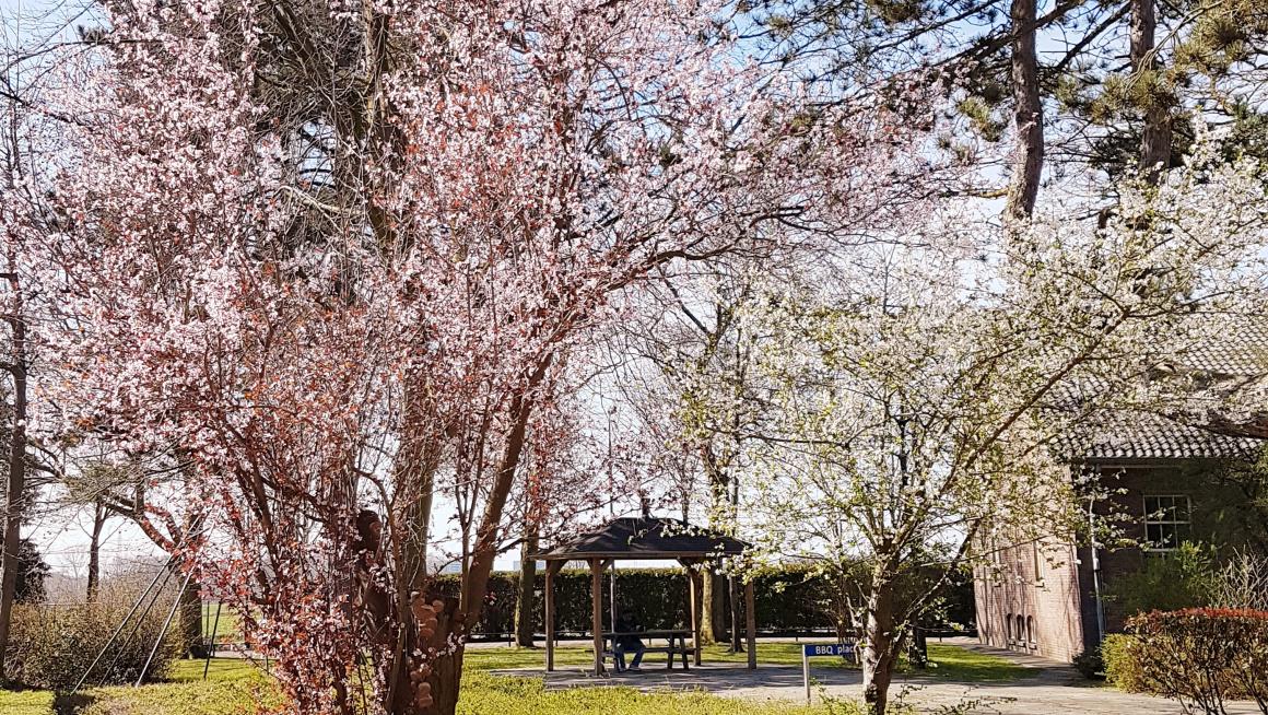 buitenterrein met gras, struiken bloeiende bomen met roze en witte bloemetjes en daarachter een prieeltje